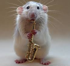 Rat with a Sax